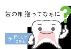 歯髄ってなぁに?
